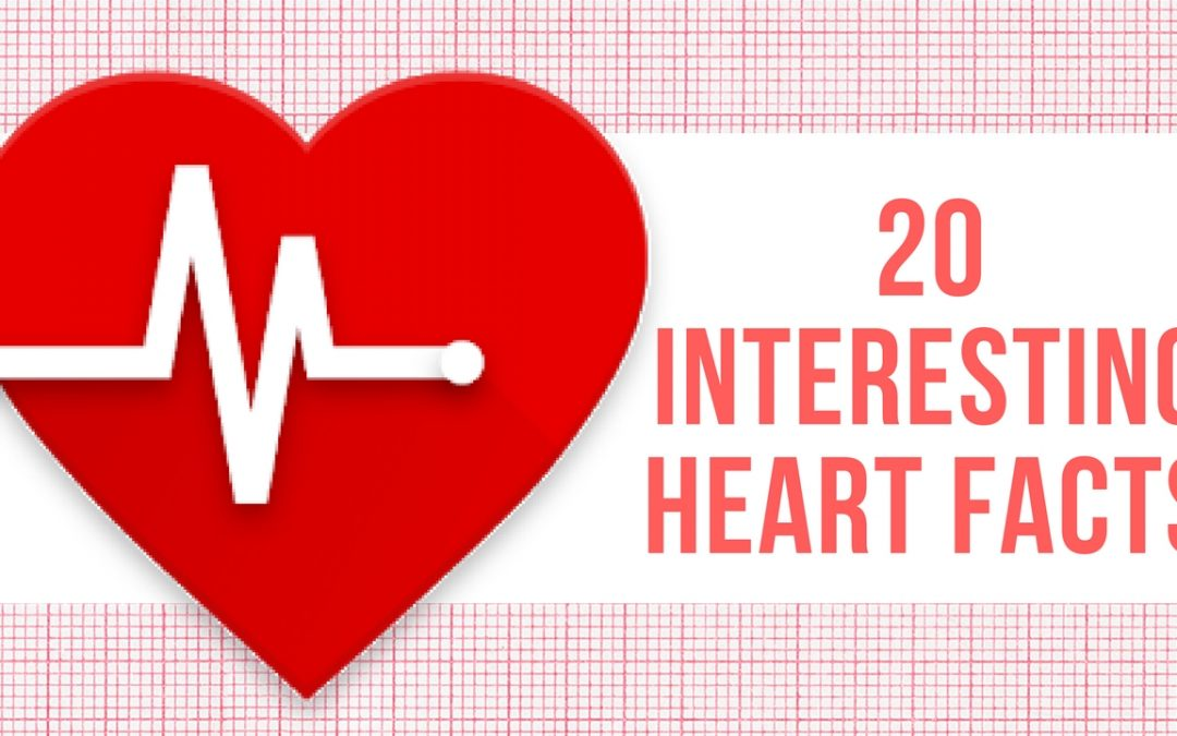 20 Interesting Heart Facts